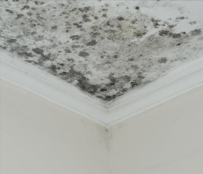 mold growing on ceiling after water damage
