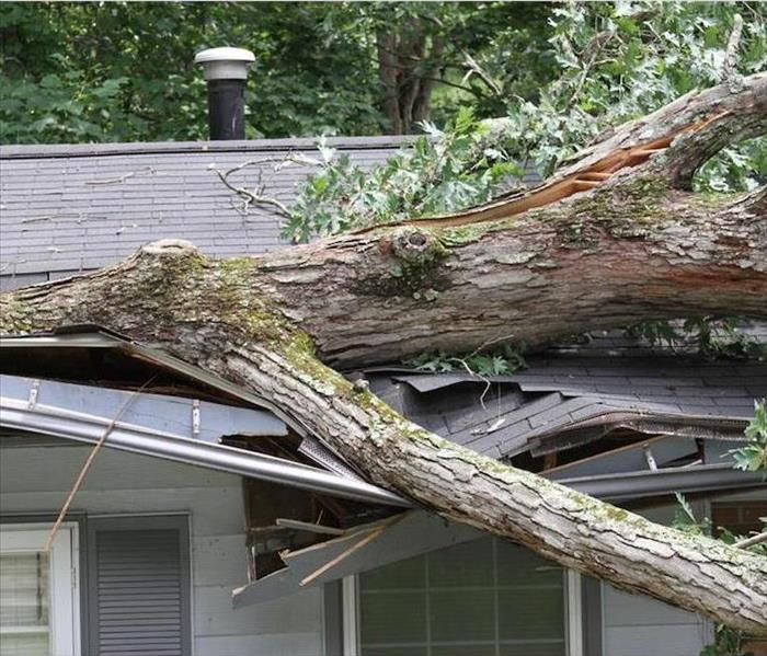 tree trunk on top of roof causing damage